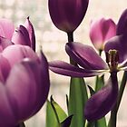 Vintage tulip by rafstardesigns