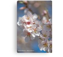 Almond Blossom 2 Canvas Print