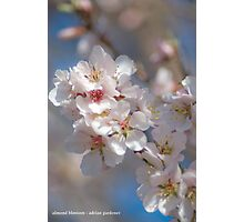 Almond Blossom 2 Photographic Print