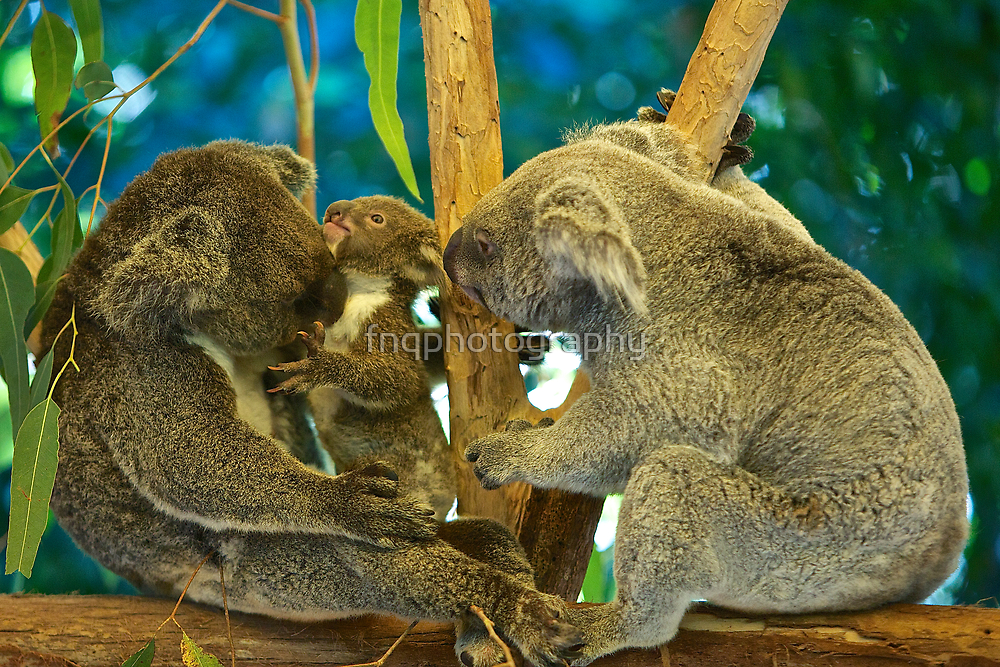 Inquisitive  by fnqphotography