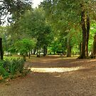 Villa Borghese in Rome, Italy by wildrain