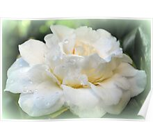 Gardenia, white and pure Poster