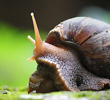 SNAIL PORTRAIT by PALLABI ROY