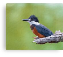 Ringed Kingfisher-Oil Painting Canvas Print