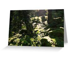 Burrator Wood, Dartmoor Greeting Card