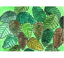Green Leaves in the Fall Photographic Print