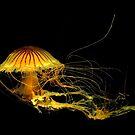 Underwater Art ~ Part Four by artisandelimage