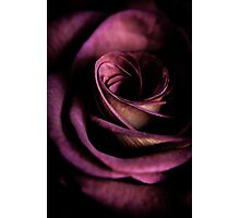 Some flowers are more perfect than others Photographic Print