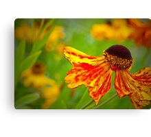 Heleniums Flammenrad Canvas Print