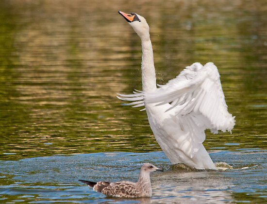 The Gull & Swan by Margaret S Sweeny