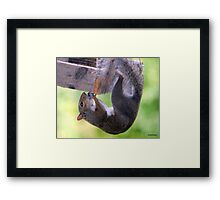 Silly Squirrel Framed Print