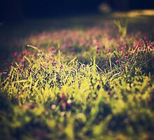 Little violet flowers on the meadow (Vintage and Retro nature Photography) by Andreka