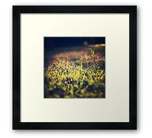 Little violet flowers on the meadow (Vintage and Retro nature Photography) Framed Print
