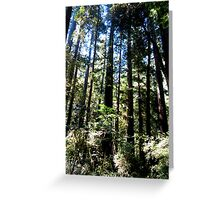 Blue Sky And Redwoods Greeting Card