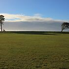 Trees, grass and sky at Carter's Beach by Duncan Cunningham