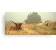 Hairy Highlanders In The Mist Canvas Print