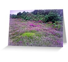 Heathland-Arne Dorset Greeting Card