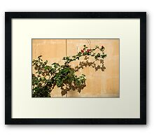 Of Light and Shadow - Bougainvillea on a Timeworn Plaster Wall Framed Print
