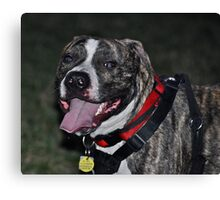 My Beautiful Fellie Canvas Print