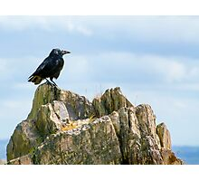 Crow On The Rocks Photographic Print