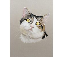 Charlie the beautiful cat! Photographic Print