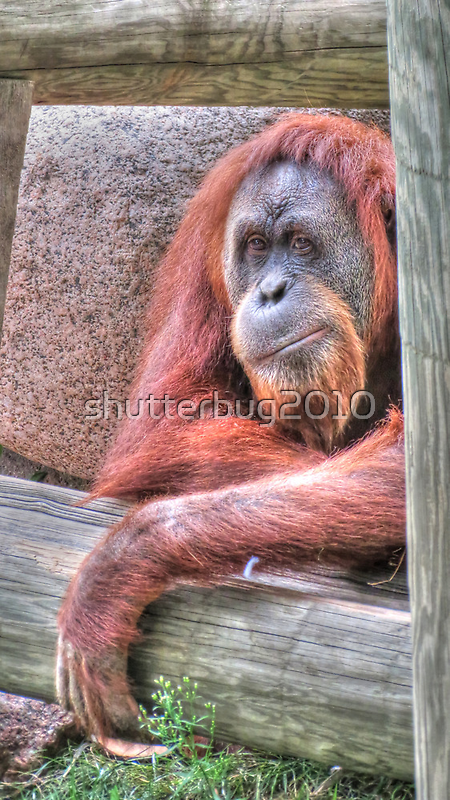 Slow Day by shutterbug2010