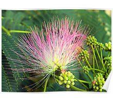 Persian Silk Bloom Poster