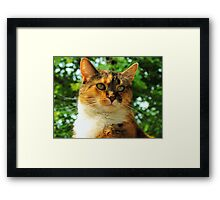 August Warmth~ Framed Print