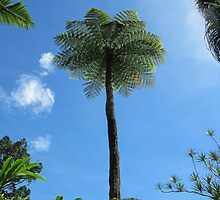 Tall Scaly Tree Fern, -cyathea cooperi- Cairns Botanic Gdns. by Rita Blom