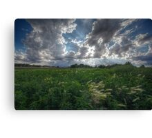Blowing In Canvas Print