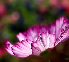 Queen of the garden by Celeste Mookherjee