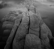 Alone On A Rock by Bob Larson