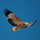 Sea Eagle by fotoWerner