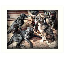 The Dogs Day Out Art Print