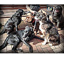 The Dogs Day Out Photographic Print