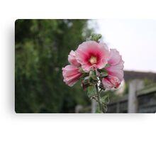 Flower Shot Canvas Print