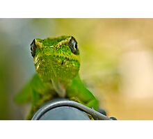 Lizzard Photographic Print