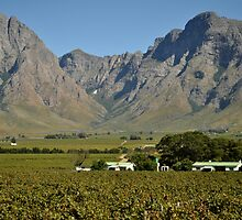 Western Cape farmlands by Karen01