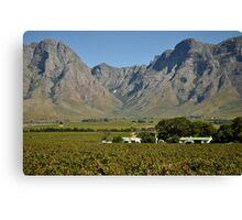 Western Cape farmlands Canvas Print