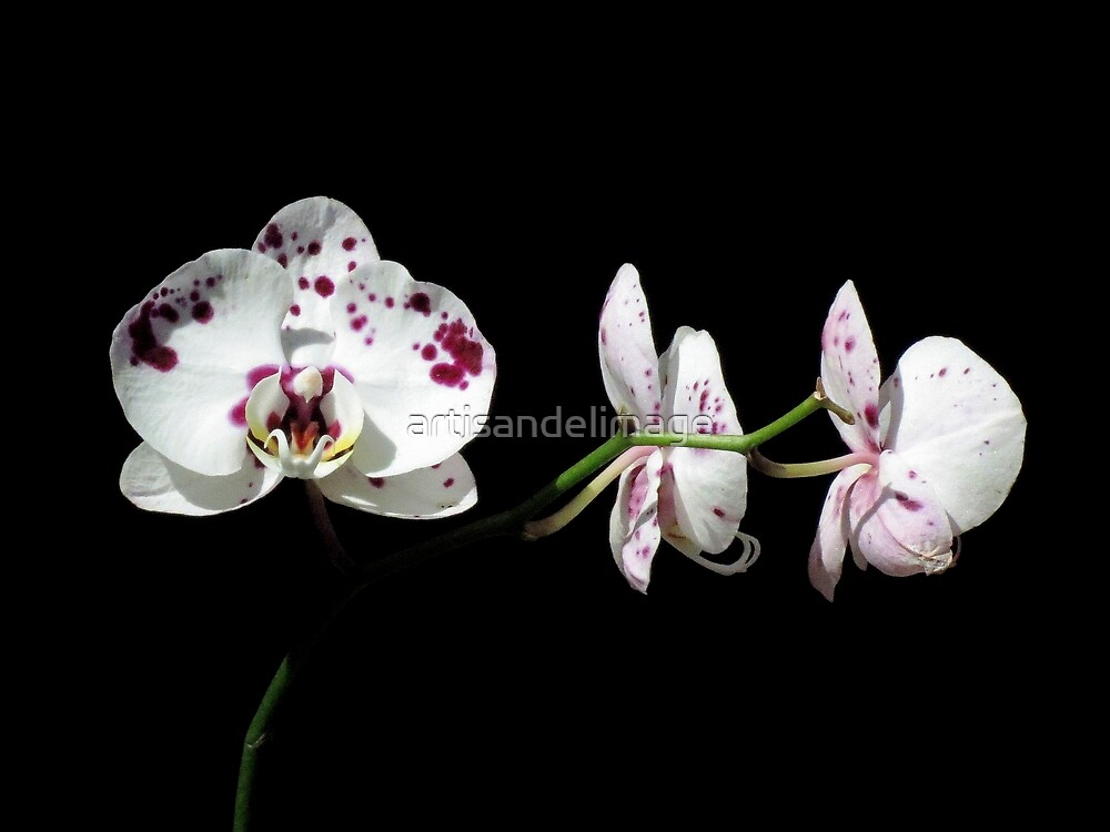 Black With A Hint Of Botanical Element ~ Part Eight by artisandelimage
