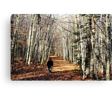 Lovely fall walk Canvas Print