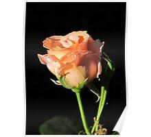 Rosebud Sunset Celebration Poster