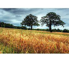 Barley Fields Photographic Print