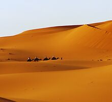 Camels in the desert by thepinproject