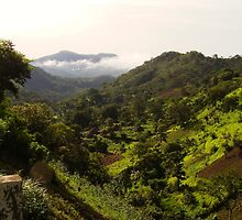 Tropical rainforest by thepinproject