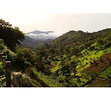 Tropical rainforest Photographic Print