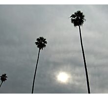 Palms and Sun Photographic Print