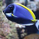 Nemo Lookalike by dsimon