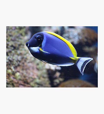 Nemo Lookalike Photographic Print