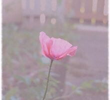 Vintage Poppy by Jess Meacham